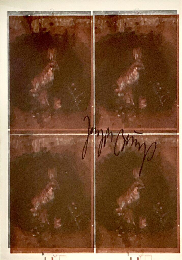 Hasen, Joseph Beuys